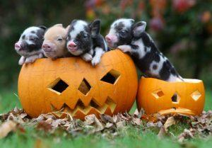 October Half Term Fun at Pennywell Farm